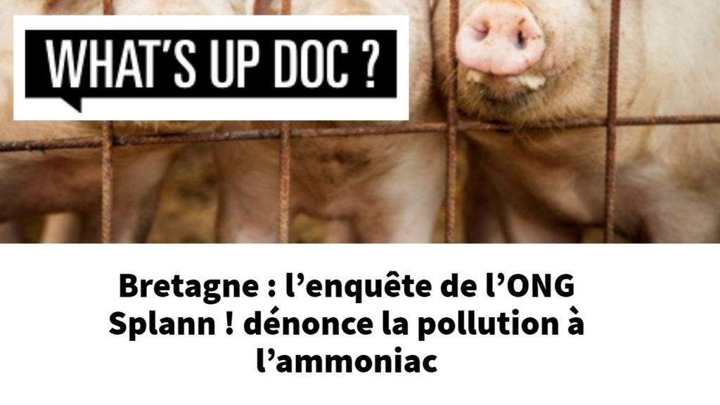 210616 - What's up doc Bretagne l'enquête de l'ONG Splann ! dénonce la pollution à l'ammoniac